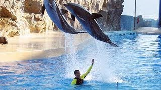Hong Kong Ocean Park Trip Review Flip HD Camcorder Review