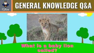 General Knowledge Quiz for Kids [Question and Answer] screenshot 4