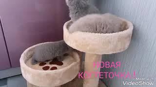 British Kitten 1 m, PLUSH BLUE RAY SPb +7 921 330 51 55