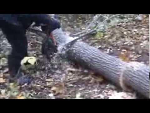 Družba chainsaw in action