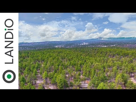 SOLD : Land For Sale in New Mexico : 16 Acre Wooded Mountain Homesite Surrounded by National Forest