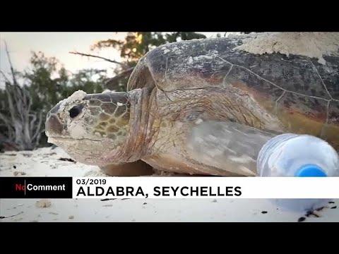 شاهد: تنظيف الشواطئ من البلاستيك في سيشل تحضيراً لتكاثر السلاحف البحرية…  - نشر قبل 4 ساعة