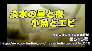淡水魚の昼と夜【水中動画の定期更新No.515】