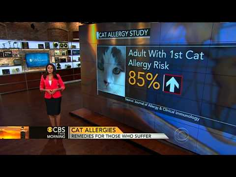 CBS This Morning – The truth about cat allergies