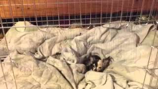 Premium Folding Silver Dog Crate 48x29x32 | Watch This Folding Silver Dog Crate 48x29x32 Review!