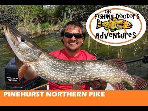 How to: Fishing Big Spring Pike Pinehurst Lake Alberta