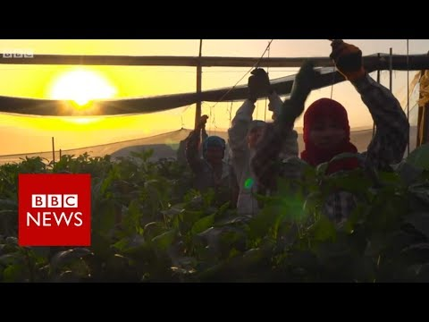 Israel's forgotten Thai workers - BBC News