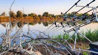 Рыбалка на дикаре в корягах Такой маленький водоем а рыбы кишит Отдохнули так отдохнули