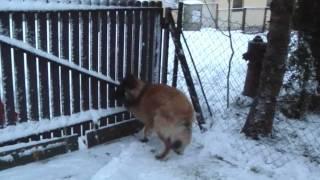 Andy a první sníh.wmv
