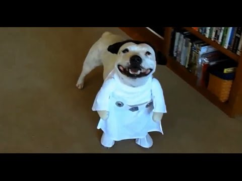 14 Insanely Adorable Dogs in Two-Legged Costumes