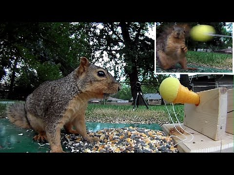 Toy shooter vs Squirrel - Who is quicker? You decide