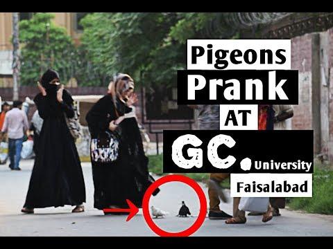 PIGEONS SCARY GIRLS PRANK At GCU Faisalabad   FSD Pranks  