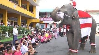 อยุธยาไอเดียบรรเจิดจับช้างแต่งชุดซานตาครอส