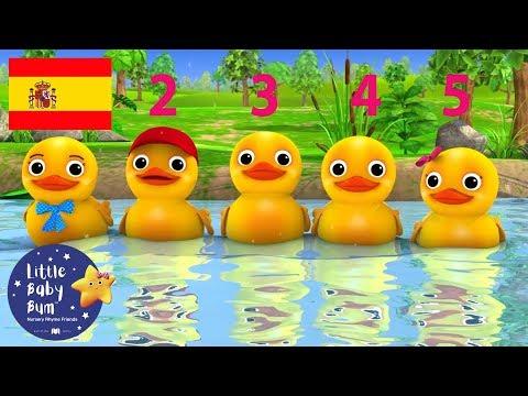 Canciones Infantiles   Contar Cinco Patitos   Dibujos Animados   Little Baby Bum en Español