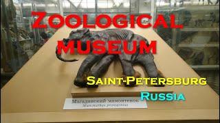 Смотреть видео Зоологический музей, Санкт-Петербург, Россия (Июнь, 2019) онлайн