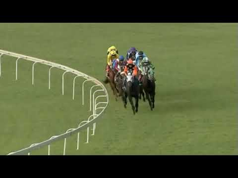 DON'T LOOK BACK - 4RACING GOLD BOWL (Grade 3)