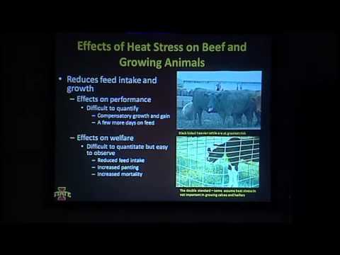 Lameness In Dairy Cattle: Causes and Consequences