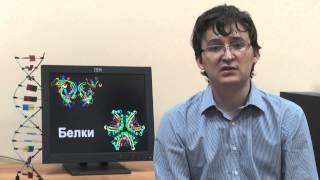 Белок и классификация аминокислот