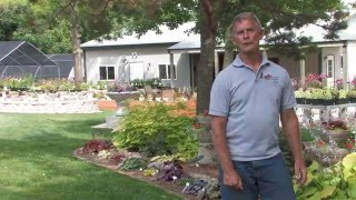 Color for the Shade Garden: Rose-Hill Gardens Video Series Episode 11