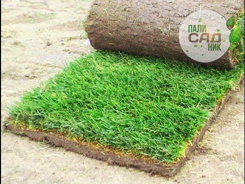 Нарезка укладка рулонного газона. Купить газон Киев