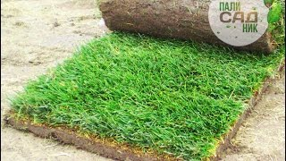 Нарезка укладка рулонного газона. Купить газон Киев(, 2015-01-27T21:10:22.000Z)