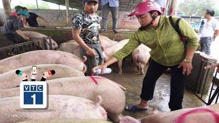 Giá lợn hơi tăng vọt vì không có nguồn cung