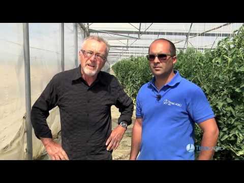ATC in Campo - Antonio Mula e il pomodoro in serra