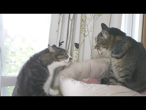 兄弟猫の口喧嘩