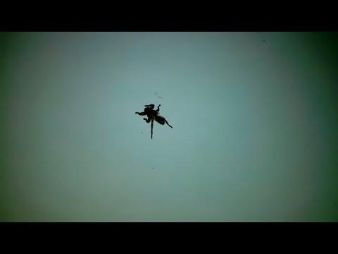 Оленья кровососка, Лосиная муха, Лосиный клещ