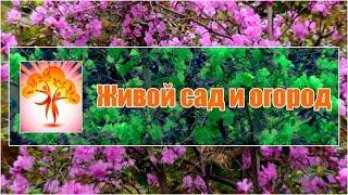 Живой сад и огород - ютуб канал о садоводстве и природном земледелии