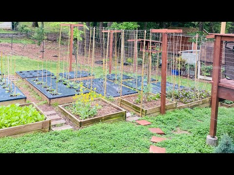 Asian Vegetable & Southern Vegetable Garden Tour
