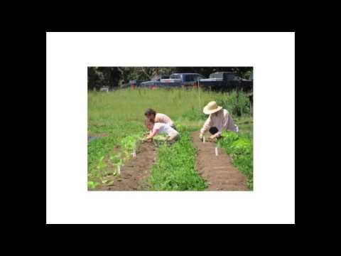 Trialing No-Till Systems in the Market Garden Webinar
