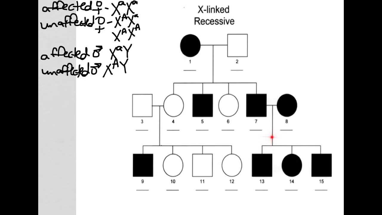X linked recessive pedigree youtube x linked recessive pedigree geenschuldenfo Images