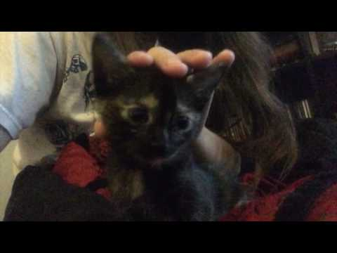 Random Cat Videos 2