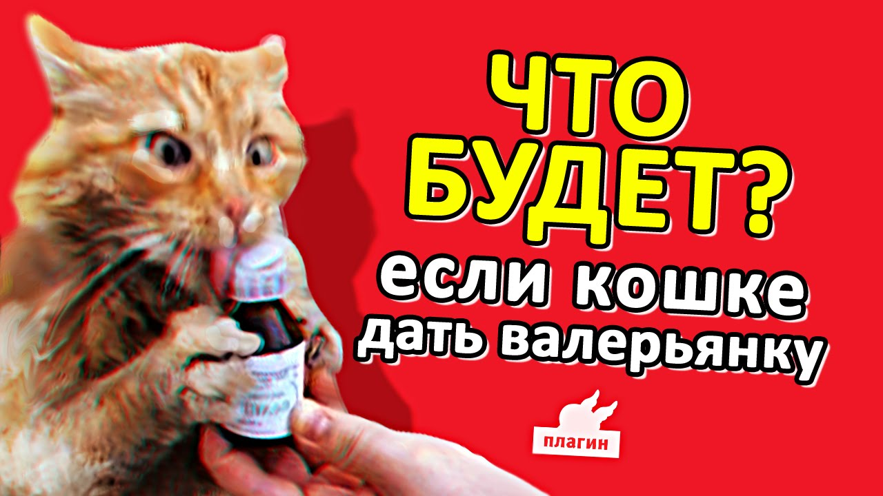 Если дать коту валерьянку что будет видео