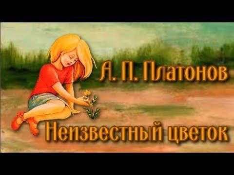 Неизвестный цветок платонов мультфильм смотреть