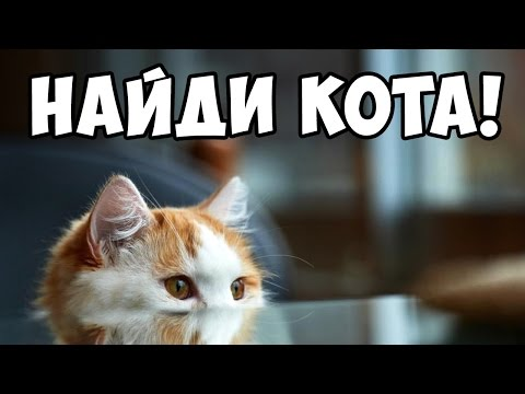 Найди кота #4 Кот маскируется Игра НАЙДИ КОТА Игры Найди кота на картинке за 10 секунд!