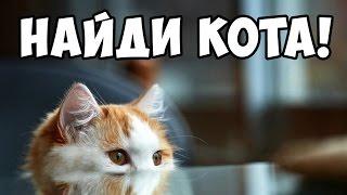 Найди кота, часть 6 🐈 БУДЬ В КУРСЕ TV