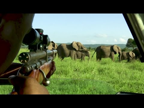Battle to Save Elephants Gaining Some Ground