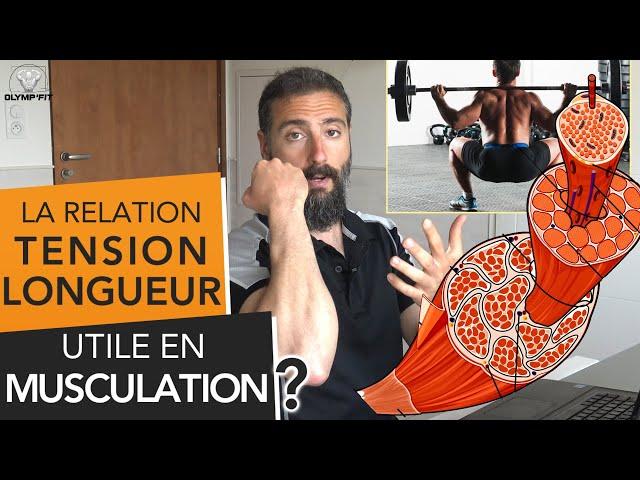 Relation TENSION / LONGUEUR : Est-ce utile en MUSCU ?