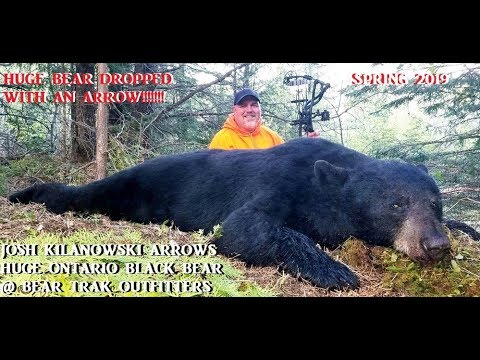 Monster Black Bear Dropped By Arrow In Northern Ontario At Bear Trak Outfitters