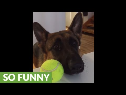 Dog makes it crystal clear he's ready for playtime