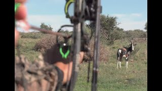 Bowhunting a very RARE Bontebok in 4K!!! | African Bowhunting Adventures