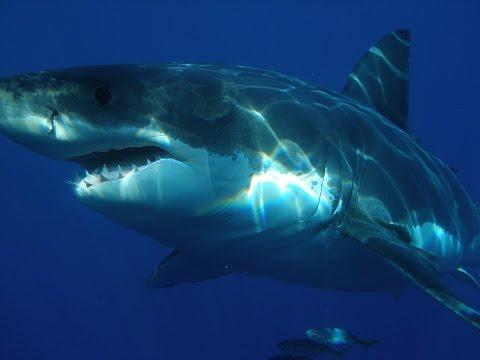 Man Eaten By Gigantic Shark At Popular Beach In South Africa