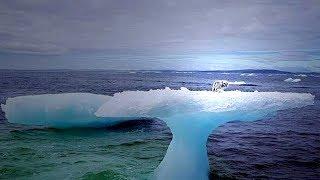 Keiner erkannte das seltsame Tier auf der Eisscholle - bis die Fischer näher kamen!