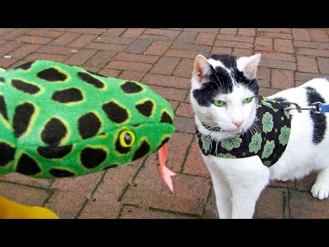 St. Patrick's Day video: SHAMROCK MAGIC | Cute Cat Kal & Snakes Happy & Fun Movie