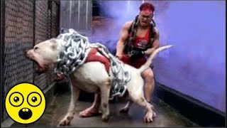 Nếu gặp 10 chú chó điên rồ này bạn phải chạy thật nhanh nếu muốn sống
