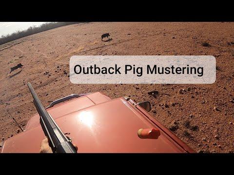 Australian Feral Pig Muster. Hog Hunting Videos. Razorback. Wild Hogs.