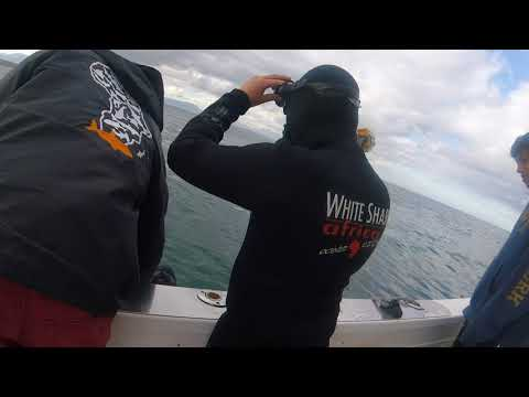Diving with Great Whites - Mossel Bay, South Africa