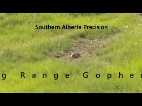 Southern Alberta Precision Long Range Gopher 2017 #3
